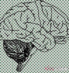 imaging brain clipart human brain neuroimaging [ 900 x 880 Pixel ]