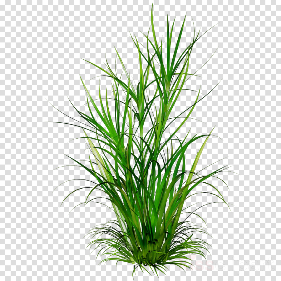 medium resolution of plant grass png clipart clip art