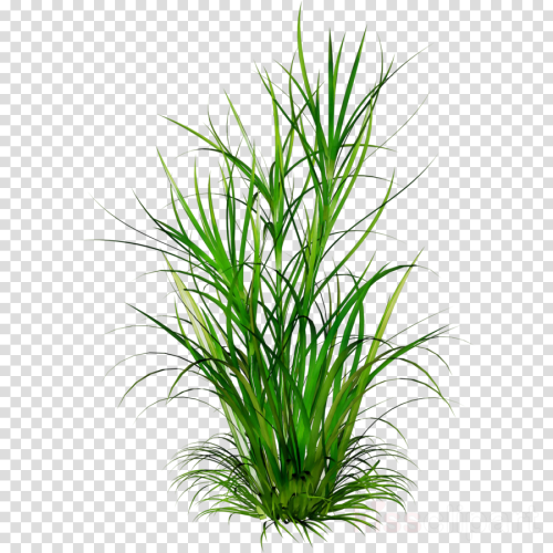 small resolution of plant grass png clipart clip art