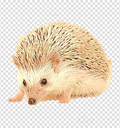domesticated hedgehog porcupine echidna fauna [ 900 x 900 Pixel ]