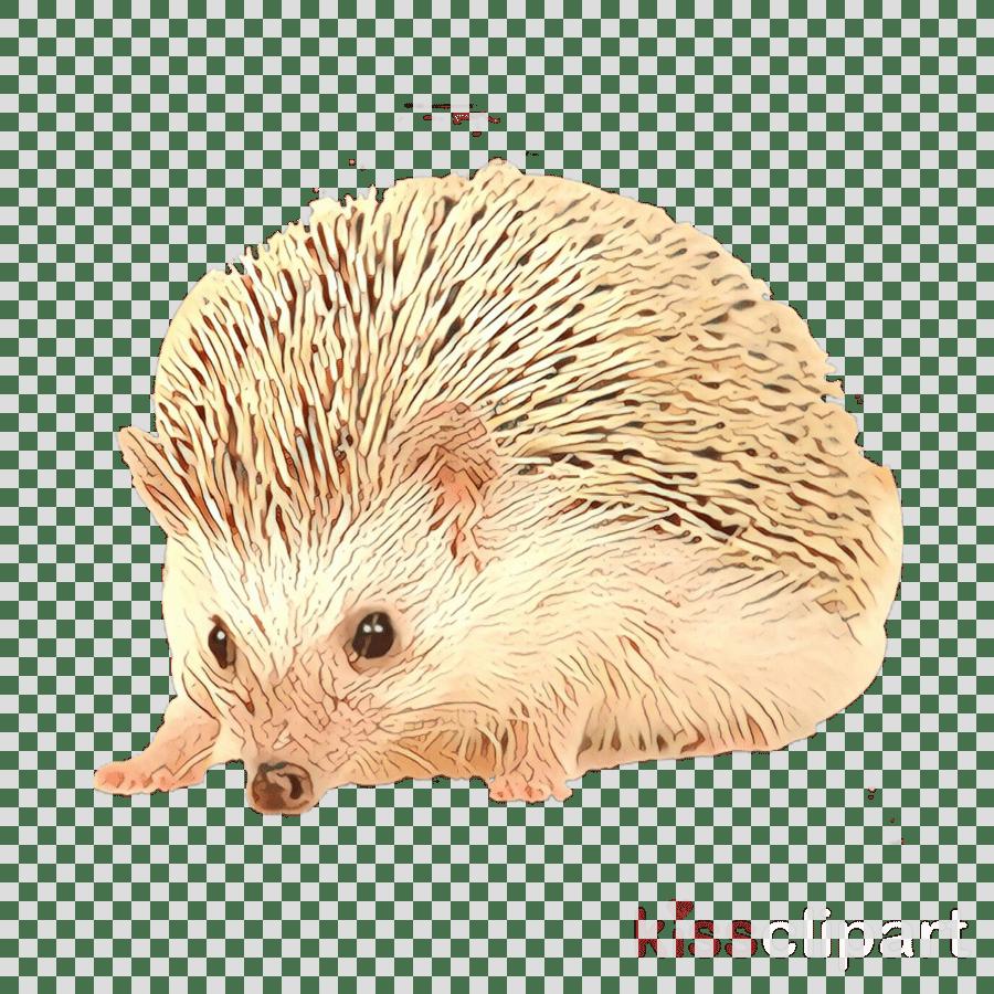 hight resolution of domesticated hedgehog porcupine echidna fauna