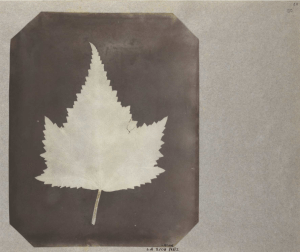 Photo of a leaf