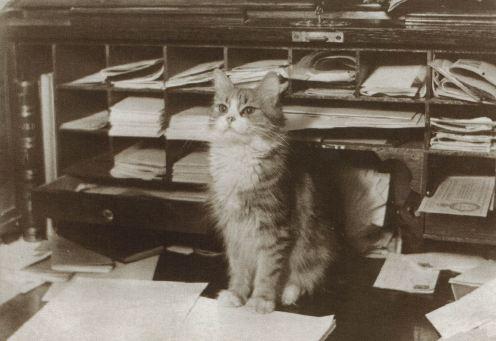 photographed-cat-d