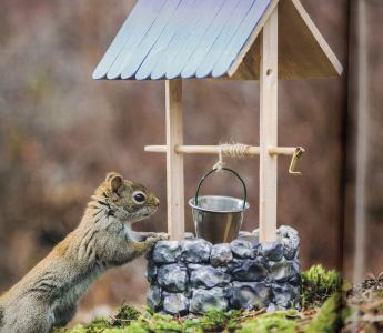 secret lives of squirrels c