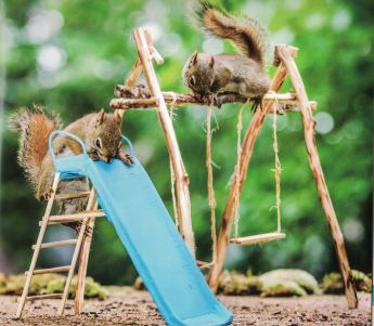 secret lives of squirrels e