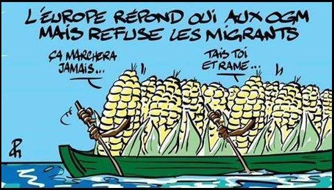 Europe oui OGM
