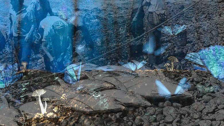 Atunes contra mariposas, 11 entrega de A tres pasos de Luna