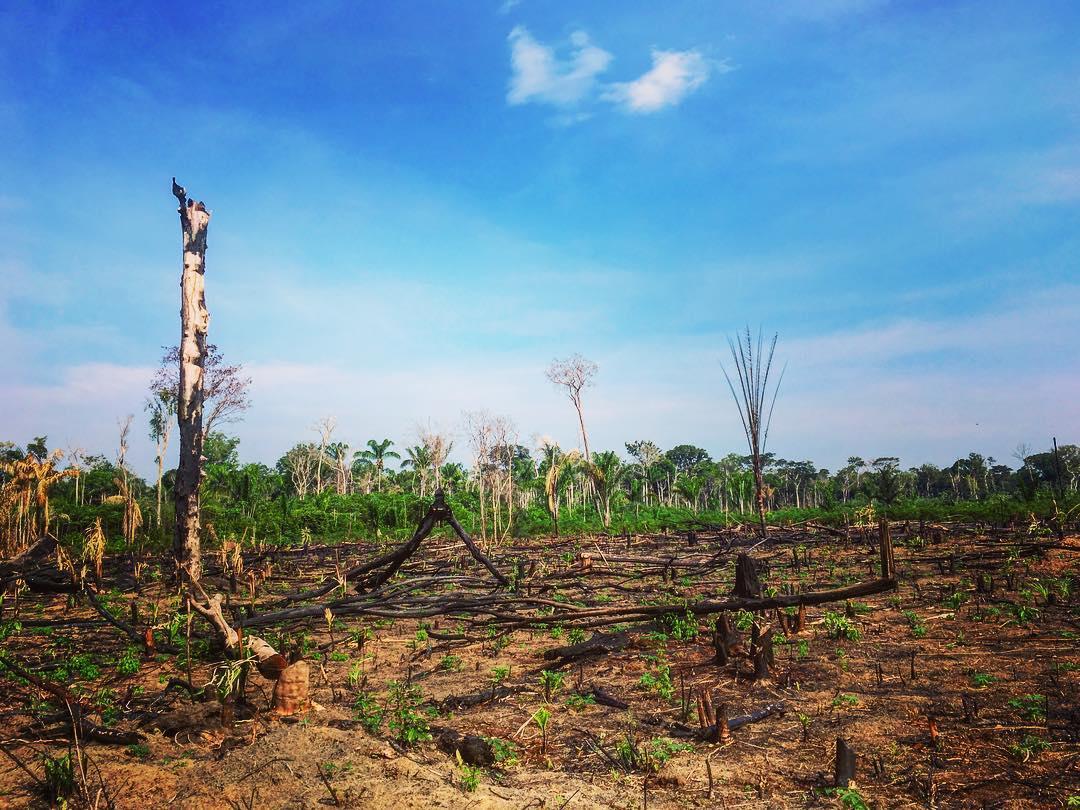 Près du village de Sudam, à deux-cent-cinquante kilomètres de Manaus, État d'Amazonas, Brésil. Terre brûlée. Contrairement à l'impression que l'abondance de flore qu'on y trouve pourrait donner, la terre lavée par les pluies du bassin de l'Amazone est très peu fertile.