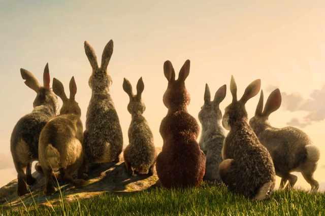 La collina dei conigli (2018)