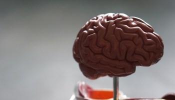 Cerebro humano psicologia neurociencias