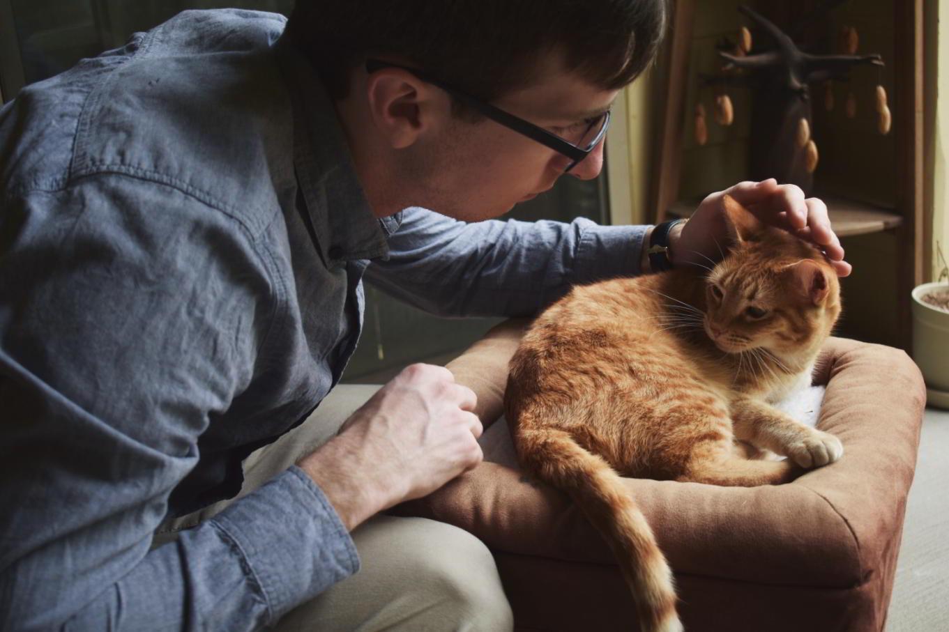 Humano gato