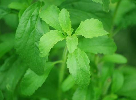 La stevia una buena alternativa al consumo de azúcar