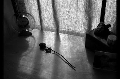 Rosa rosae, true love  y un primer pensamiento desafortunado sobre la pasión.