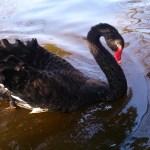 """Una conversación con Rolando Kattan sobre """"Los cisnes negros"""", XX Premio Casa de América de Poesía Americana"""