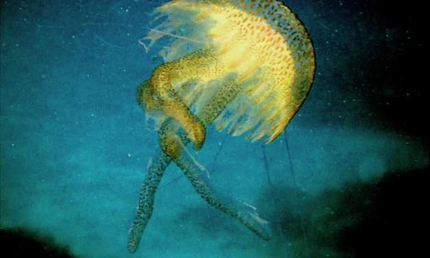 Las fotos submarinas del Mediterráneo de Beatriz García Infante