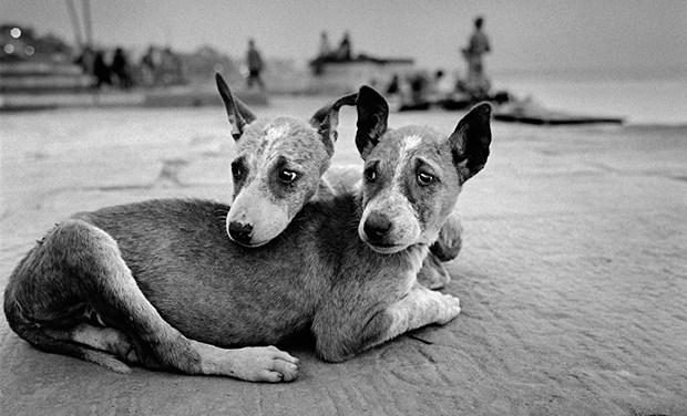 Michel Vanden, el fotógrafo de las relaciones entre mascotas y amos