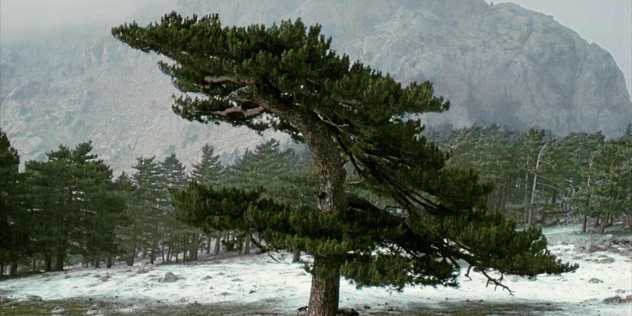 Frank Orbat, retratos de árboles con vida propia y mirada ajena