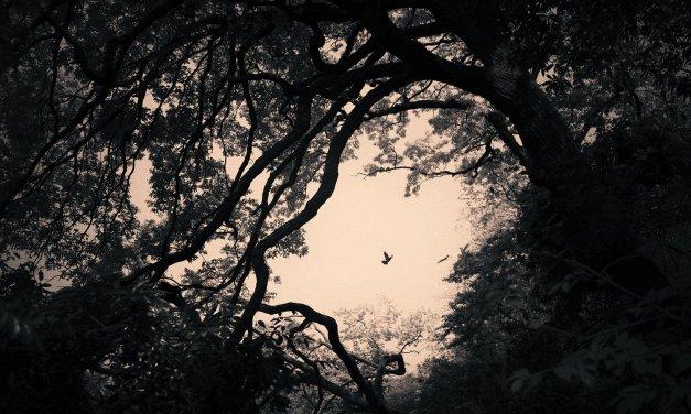 Albarrán Cabrera, el juego de los recuerdos y la imaginación
