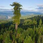Convertir a los árboles en los protagonistas de una novela. Richard Powers