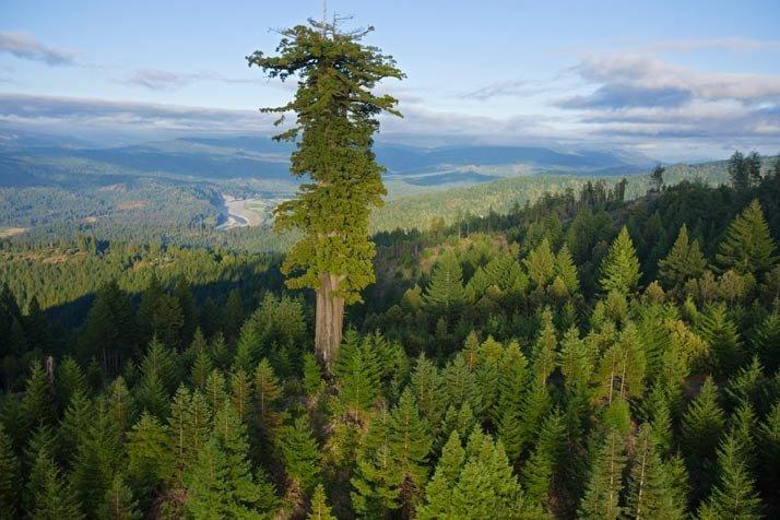 Richard Powers, convertir a los árboles en los protagonistas de una novela