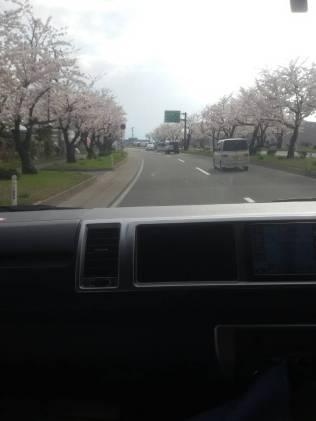 hirosaki castle 6