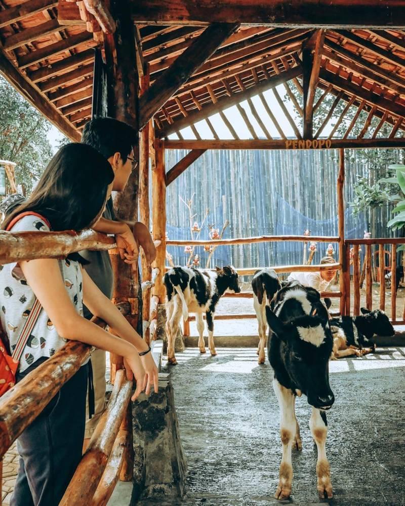 Happy Farm Ciwidey