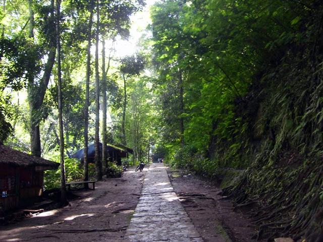 Taman Hutan Raya Djuanda adalah tempat yang sejuk dan segar untuk trekking ringan.