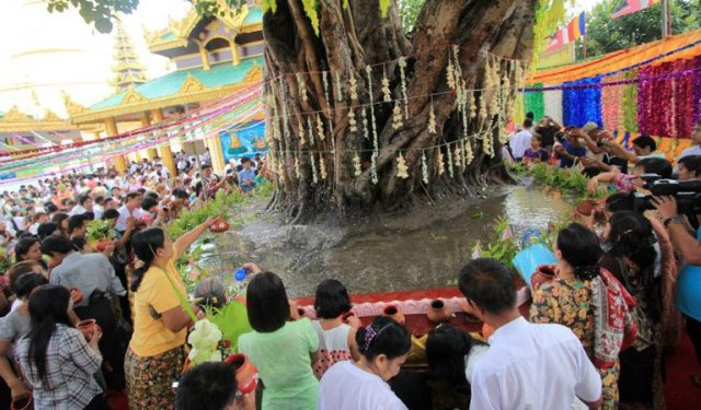 Bodhi Tree is considered sacred at the Kason Festival