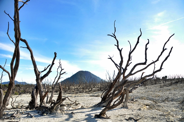 Hutan Mati di Gunung Papandayan