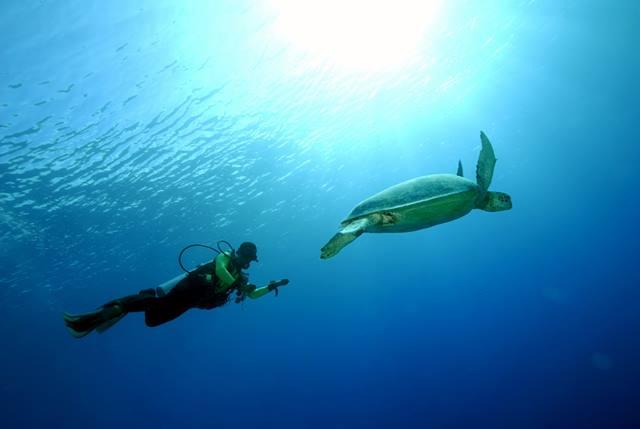 Menyelam bersama Penyu di Derawan.