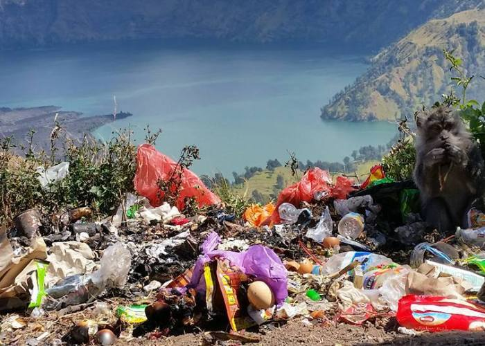 Kasian monyetnya makan sampah, kasian Gunung Rinjani penuh sampah seperti ini!