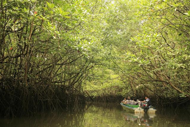 Hutan Mangrove (sumber)