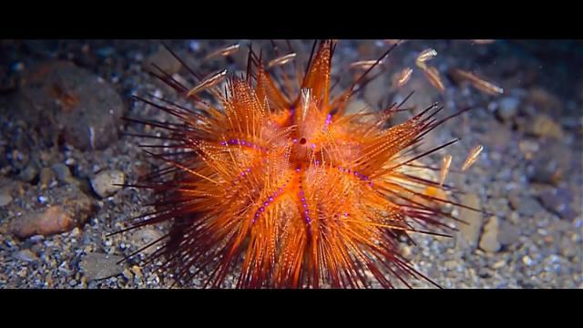Di Maluku kalian bisa diving untuk menikmati keindahan bawah lautnya.