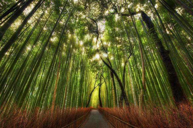 Hutan Bambu Sagano, Jepang (sumber)