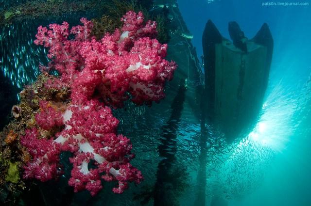 Panorama bawah laut Aborei, Raja Ampat.