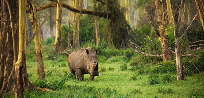 Banten - Taman Nasional Ujung Kulon