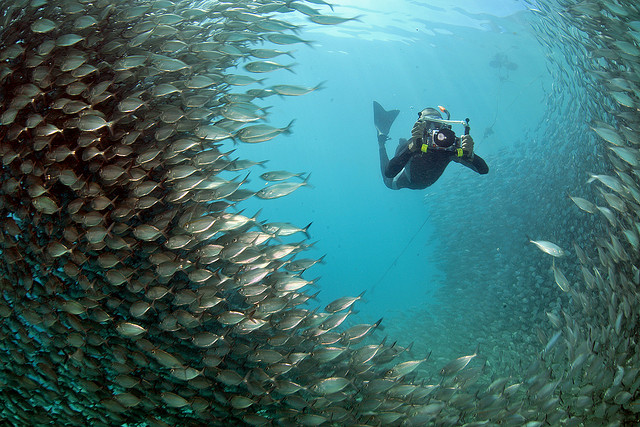 Raja ampat adalah salah satu tempat menyelam terbaik di Indonesia