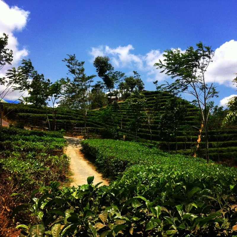 Desa Wisata Nglinggo Kulon Progo, Untuk Kalian Yang Mau Menyegarkan Diri!
