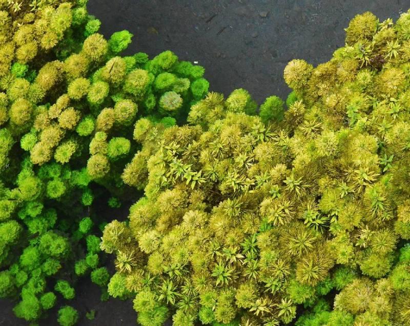Tumbuhan hijau sejenis ganggang yang hidup di tempat wisata terbaru Malang ini