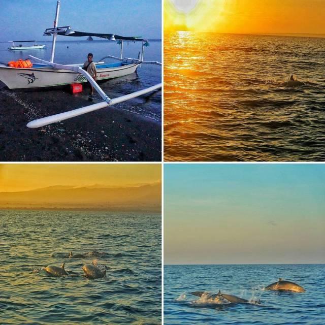 Lumba-lumba liar adalah daya tarik utama Pantai Lovina by IG @mahaadit