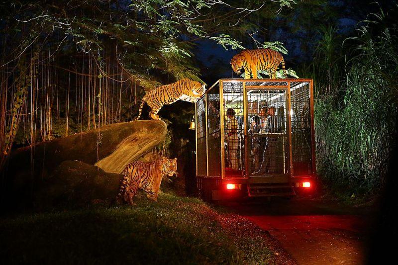 Kegiatan night safari yang menegangkan