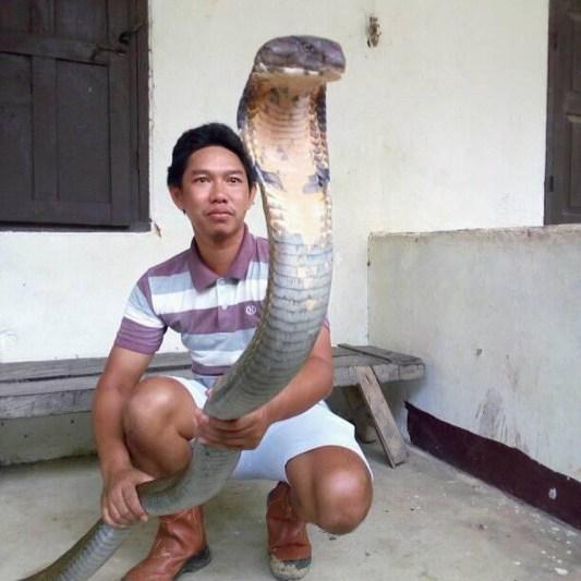 Tenang saja, kamu tak akan menemukan ular kobra di Pantai Kobra.
