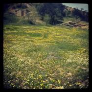 قرية الزوية، غريان