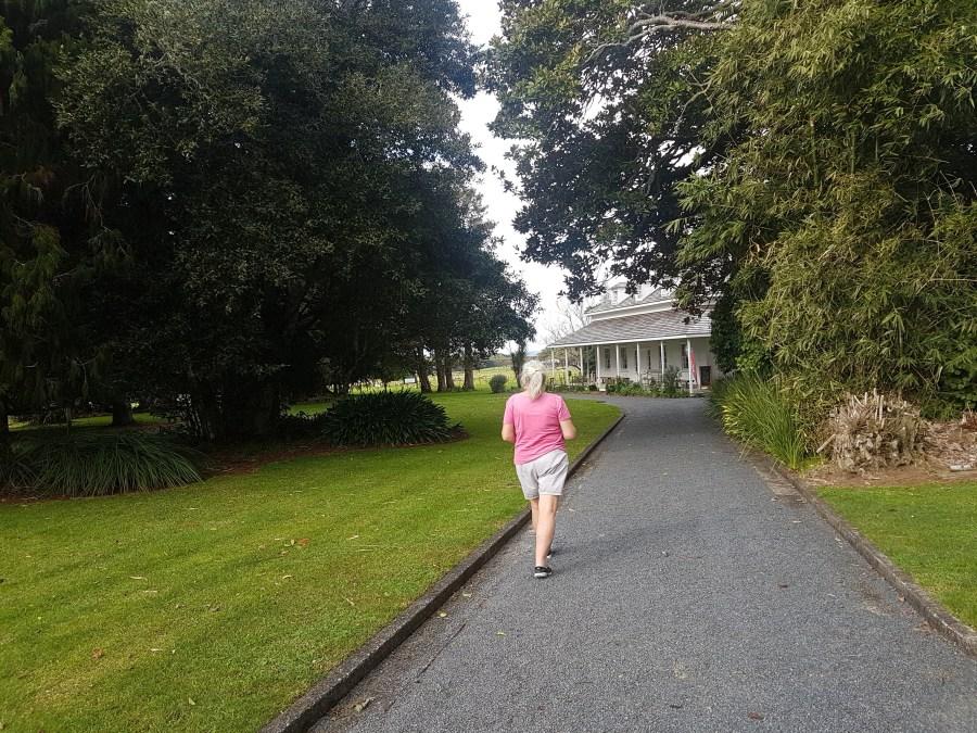 The tree lined walkway