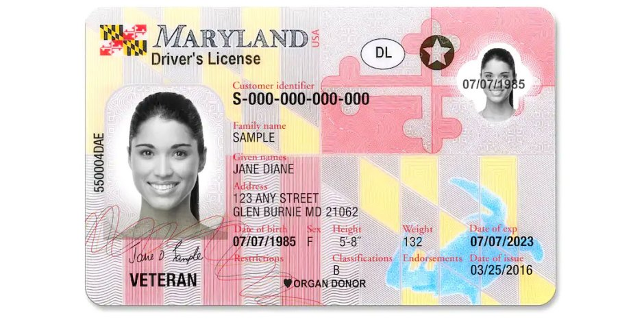 Maryland Driver's License