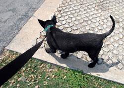 Dog on a lead. Pic: chaychayolei