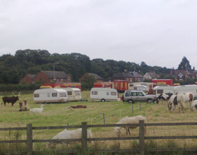 Some of the circus animals grazing in Lichfield