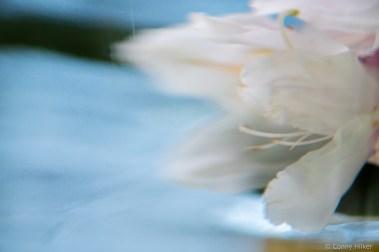 Blüte hin- und her gezogen im Wasser