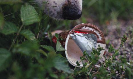 Plastik, ist das Kunst oder kann das weg? | FOTOFREITAG