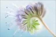Blume - Gaby Kniep